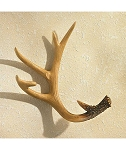 Antler Wall Plate Holder