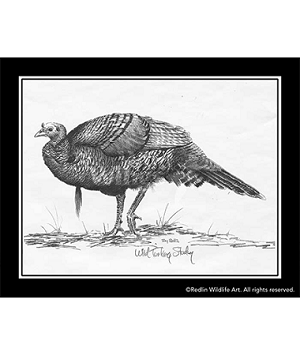 Pencil Sketch - Turkey